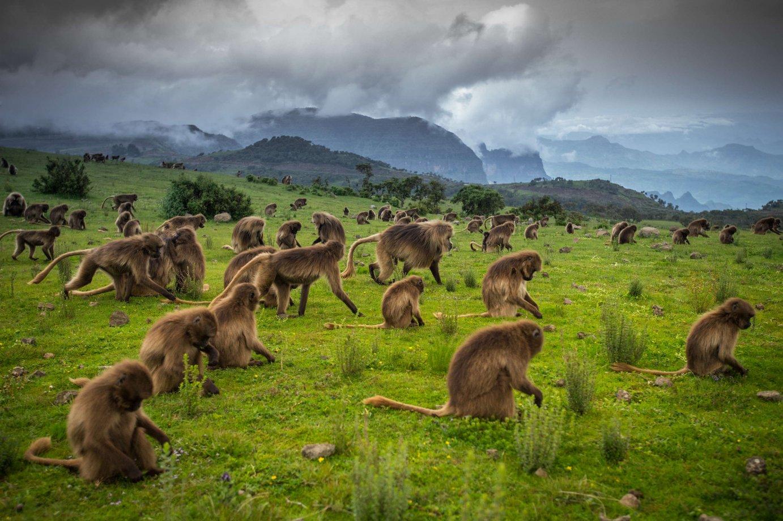 Simien National Park Tour